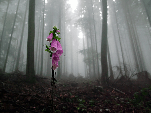 flower in forest